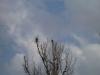 2006-03-12pic004