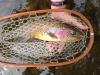 henryfishy2