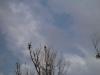 2006-03-12pic003